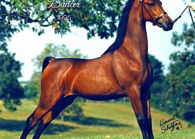 1995 Clearview Timeless Dancer