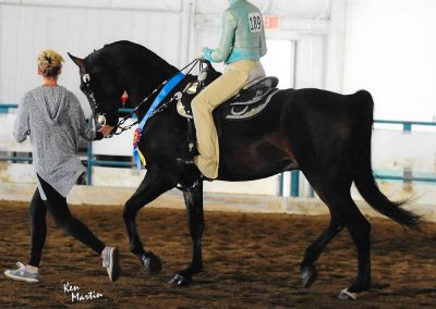 HyLee's Contender saddle